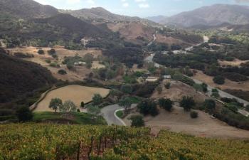 the-vineyard